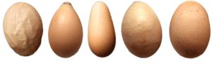 Strange eggs