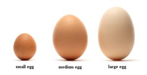 size eggs
