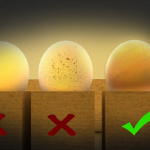 Candling-the-Eggs.png